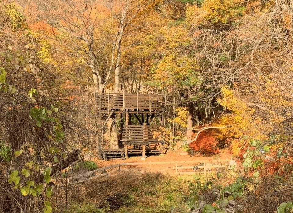 さくらいツリーハウス
